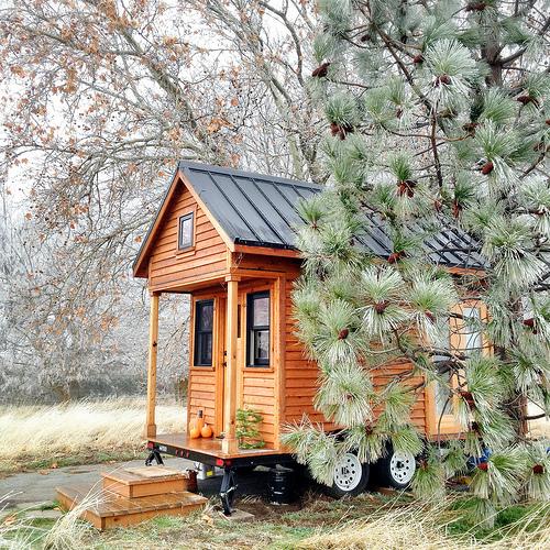 Tiny house and pine tree.
