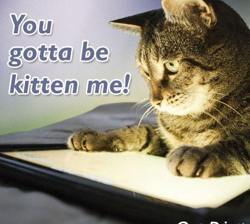 OD Kitten