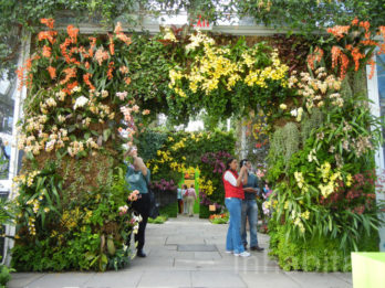 A vertical garden arch