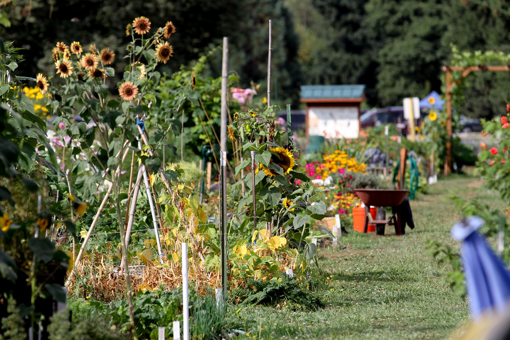 Marymoor Park community garden