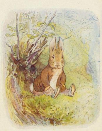 Beatrix Potter Benjamin Bunny ill  p 8