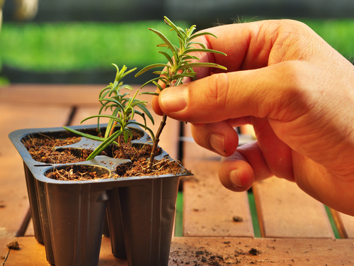 plant_propagation_proto