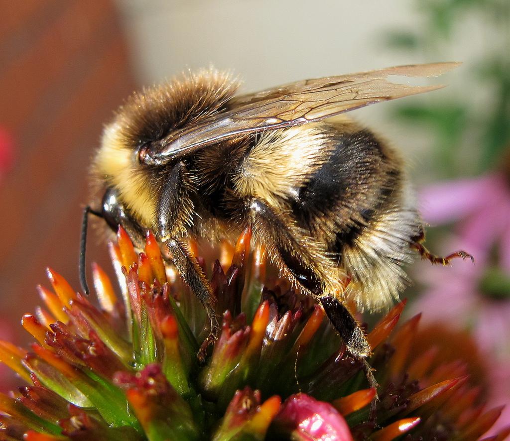 5447 cream bee 3