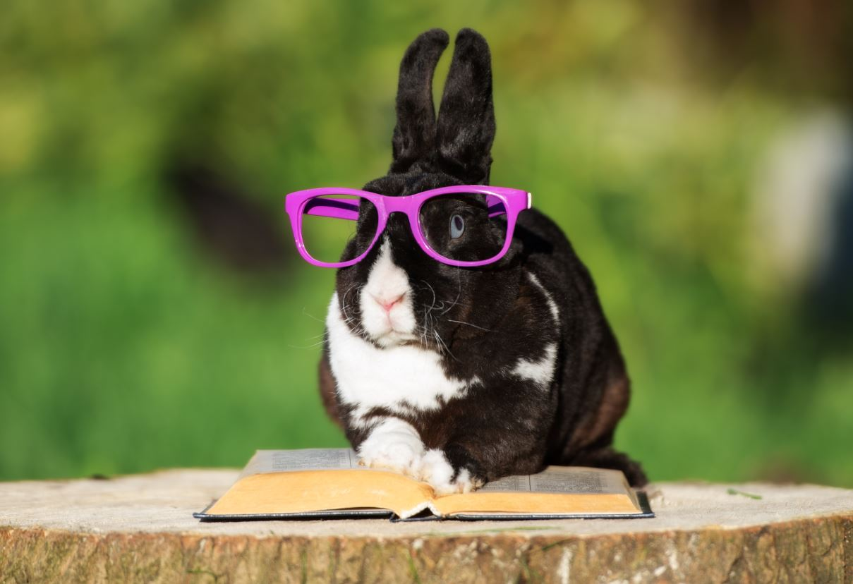 The Easter Bunny is visiting Story time - Logan City Council