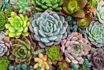 Succulents (small)