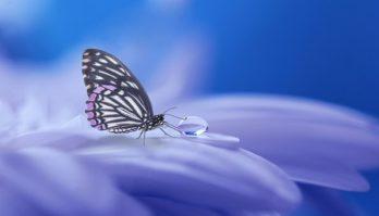 butterfly-3054736__340[1]