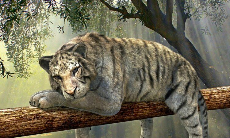 tiger-1098607_960_720